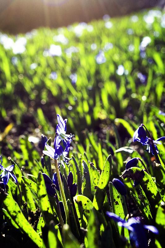 Obligatory Spring Post
