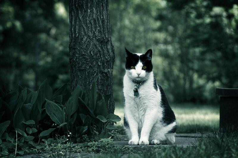 Cat Photo #5
