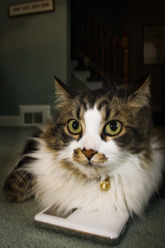 Cat Photo #6 or