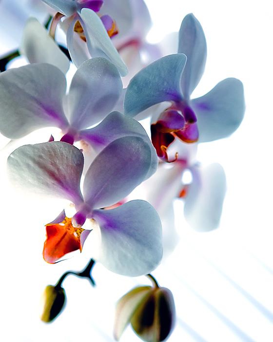 20080128013347_bloom.jpg