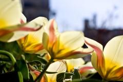 20090426191327_flowers_withgeometric.jpg