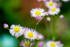 20090607213637_flowers_by_jvl.jpg
