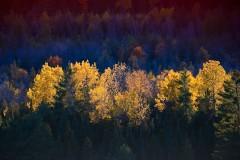 20091012220058_filtered_light.jpg