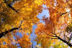 20091013213547_fall_symphony.jpg
