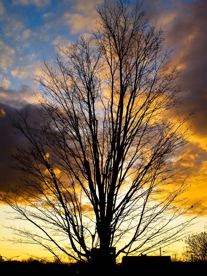 Treefingers
