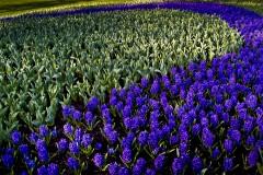 20100422204532_purple_arch.jpg