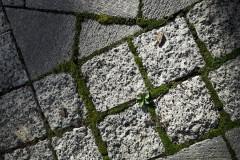 20100920211406_the_path.jpg