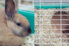 20110727231428_friendly-bunny.jpg